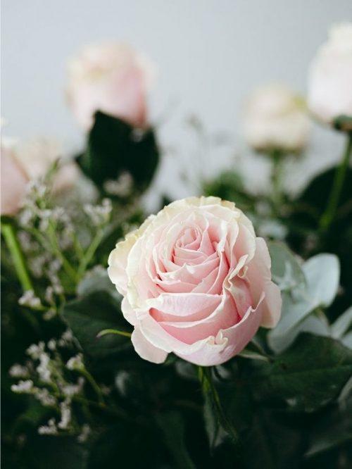 Detalle rosas rosas para regalar