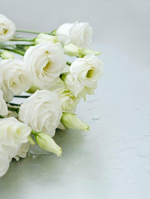 Flores Lycianthus blancas regalo bonito