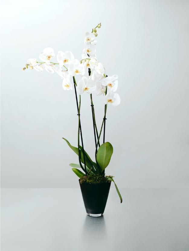 Centro de cristal orquídea blanca con envió domicilio