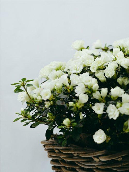 Centro de flores blancas a domicilio