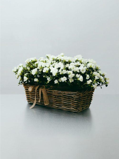 Centro de flores blancas de regalo bonito