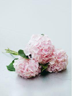 Ramo de hortensia rosa claro