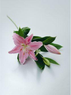 Ramo de lilium rosa para regalar