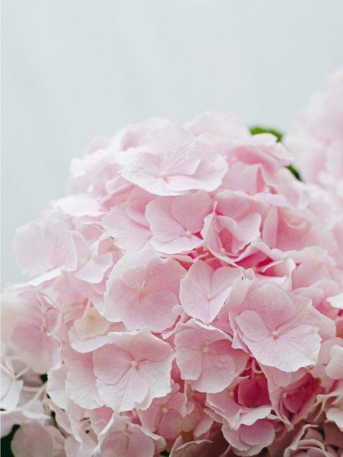 Ramo hortensias rosas claras detalle bonito